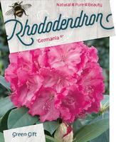 Rododendron (T) 'Germania'  - Rhododendron (T) 'Germania'