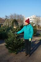 Vánoční Jedle kavkazská - Premium 100-150cm