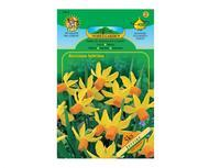 Narcis botanický JETFIRE 5ks