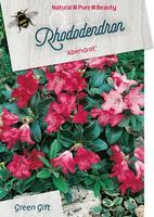 Rododendron 'Abendrot' – Rhododendron 'Abendrot'