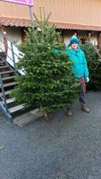 Vánoční Jedle kavkazská - exclusive 200-225cm