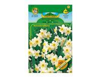 Narcis botanický MINNOW 5ks