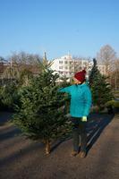 Vánoční Jedle kavkazská - Premium 175-200cm