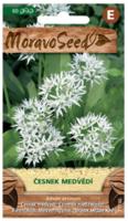 Česnek Medvědí - 60 semen