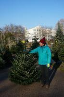 Vánoční Jedle kavkazská - Premium 150-175cm