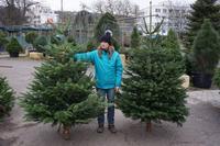 Vánoční stromek jedle kavkazská (Abies nordmanniana) Premium 175 - 200 cm