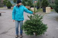 Vánoční stromek jedle kavkazská (Abies nordmanniana) Premium 100 -150 cm