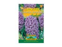 Hyacint zahradní PURPLE VOICE 3ks