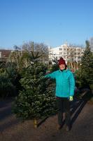 Vánoční Jedle kavkazská - Standard 175-210cm