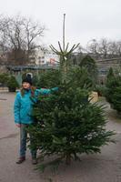 Vánoční stromek jedle kavkazská (Abies nordmanniana) Premium 200 - 250 cm