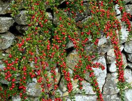 Půdopokryvné rostliny