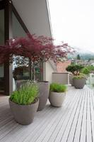 Rostliny do nádob a na terasu