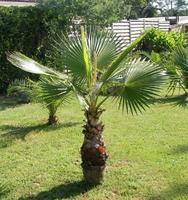 Exotické rostliny