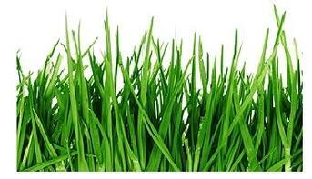ekologický trávník