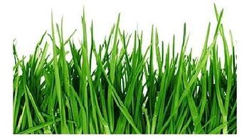 Bio trávník