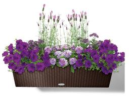 Balkonové rostliny
