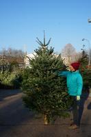 Vánoční Jedle kavkazská - exclusive 225-250cm