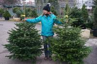 Vánoční stromek jedle kavkazská (Abies nordmanniana) Premium 150 -175 cm