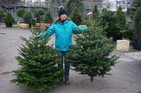 Vánoční stromek jedle kavkazská (Abies nordmanniana) Exclusive 130-160 cm