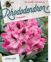 Rododendron 'Kokardia' – Rhododendron 'Kokardia'