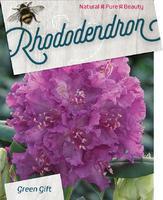 Rododendron (T) 'Azurro'-Rhododendron (T) 'Azurro'