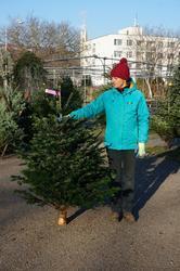 Vánoční Jedle kavkazská - exclusive 125-150cm