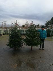 Vánoční Jedle kavkazská - exclusive 175-200cm