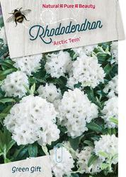 Rododendron 'Arctic Tern' – Rhododendron 'Arctic Tern'