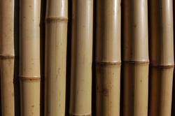 Tyč bambusová 210 cm 18-20 mm - POUZE OSOBNÍ ODBĚR