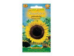 Slunečnice roční jednoduchá TAIYO, žlutá