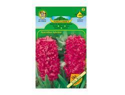 Hyacint zahradní JAN BOS 3ks