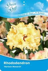 Rododendron (T) 'Horizon Monarch' - Rhododendron (T) 'Horizon Monarch'