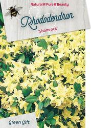 Rododendron 'Shamrock' – Rhododendron 'Shamrock'     - 1