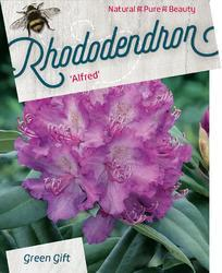 Rododendron 'Alfred' – Rhododendron 'Alfred'     - 1