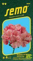 Pelargonie páskatá - Horizon Ripple Raspberry 11s