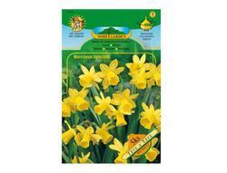 Narcis botanický TÉTE a TÉTE 5ks