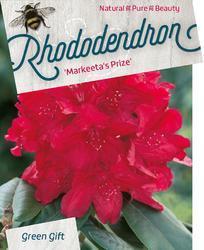 Rododendron 'Markeeta's Prize' – Rhododendron 'Markeeta's Prize'     - 1