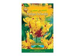 Tulipán papouškovitý TEXAS FLAME 4ks