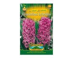 Hyacint zahradní PURPLE 3ks