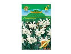 Narcis botanický THALIA 5ks