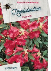 Rododendron 'Elizabeth' – Rhododendron 'Elizabeth'