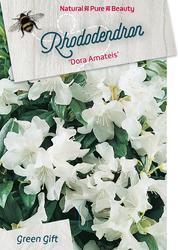 Rododendron 'Dora Amateis' – Rhododendron 'Dora Amateis'