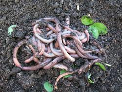 VERMAKTIV B - na pěstování listové či kořenové zeleniny a jahod 200 ml